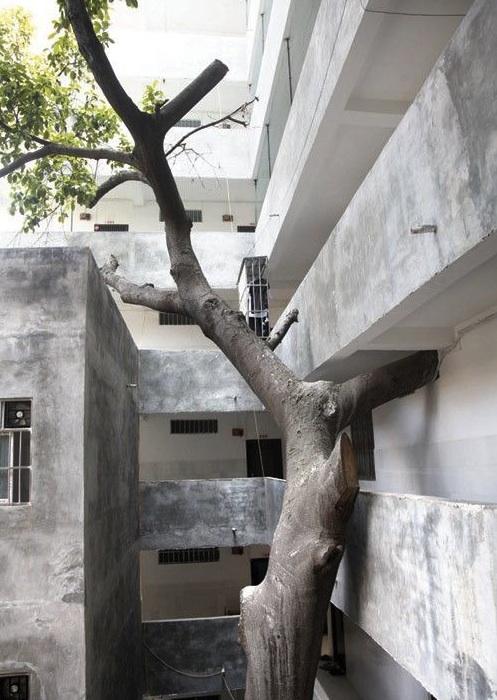 La Naturaleza se abre paso entre ladrillos, cemento y hormigón